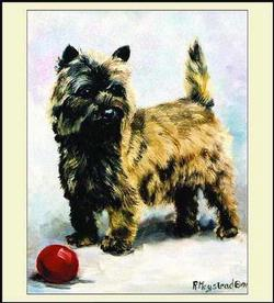 Pedigree Cairn Terrier Tapestry Throw